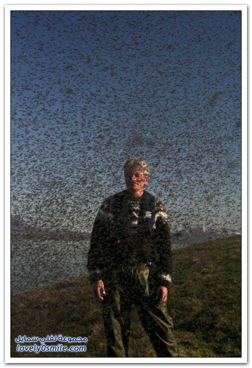 غزو البعوض لولاية ويسكونسن