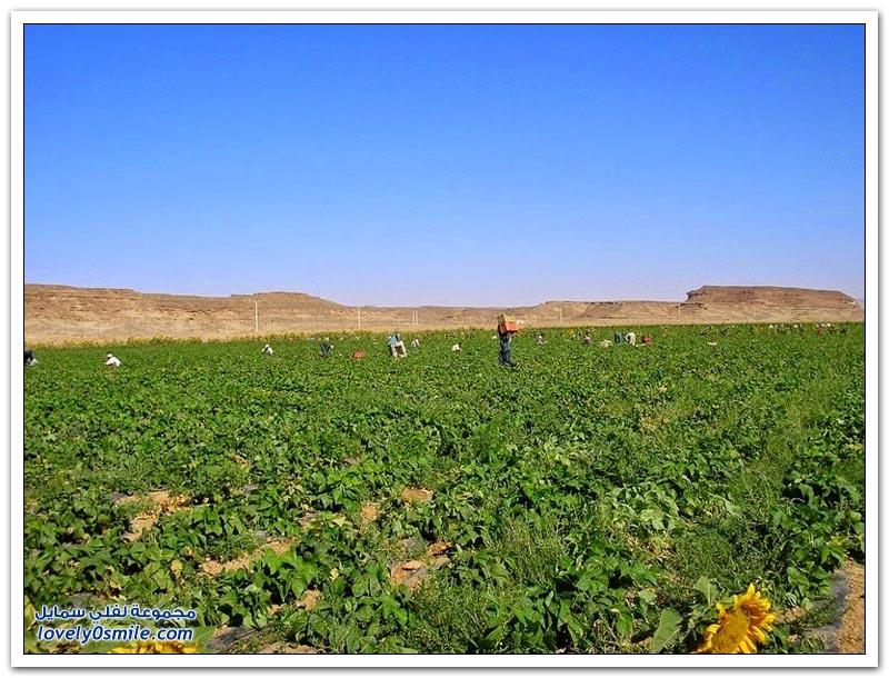 مناظر خلابة وإنتاج مثمر في صحراء وادي رم