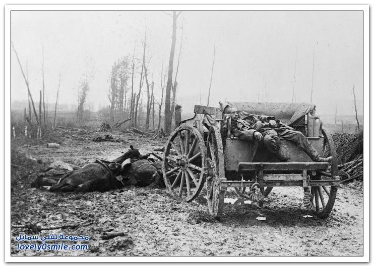 صور الحيوانات أيام الحرب العالمية الأولى