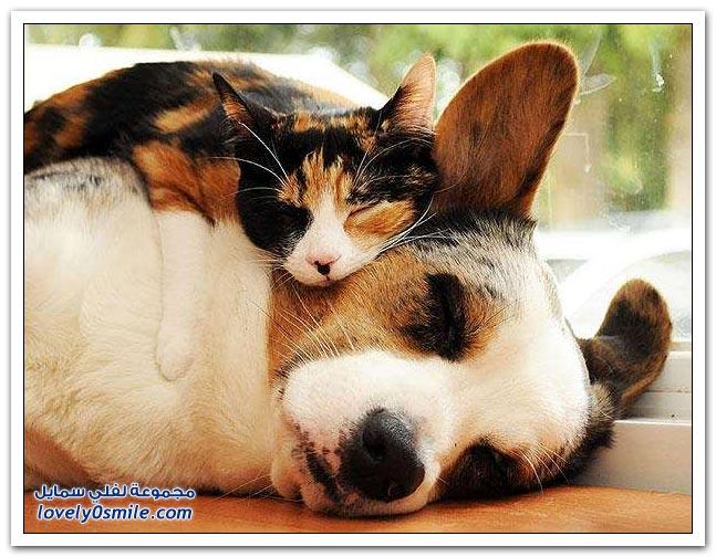 حيوانات تستخدم بعضها البعض كوسادة