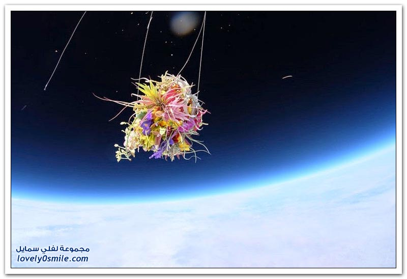 فنان ياباني يطلق مجموعة من النباتات والزهور إلى الفضاء