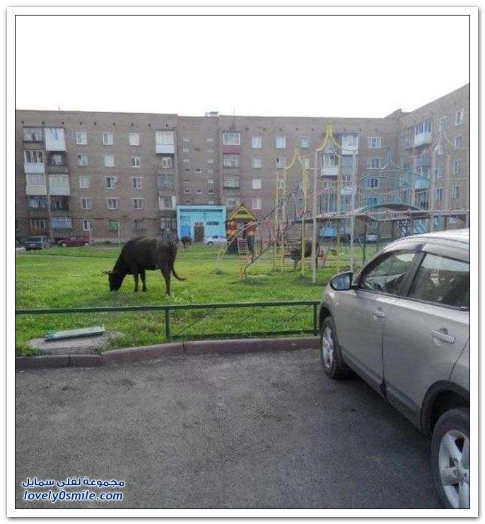 فقط في روسيا ج17