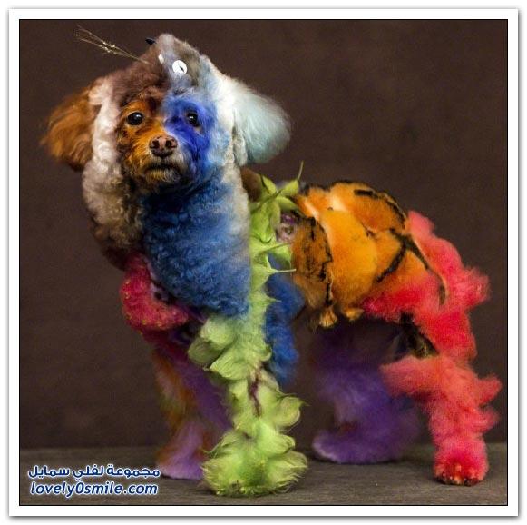 التفنن في حلاقة وتصفيف شعر الكلب
