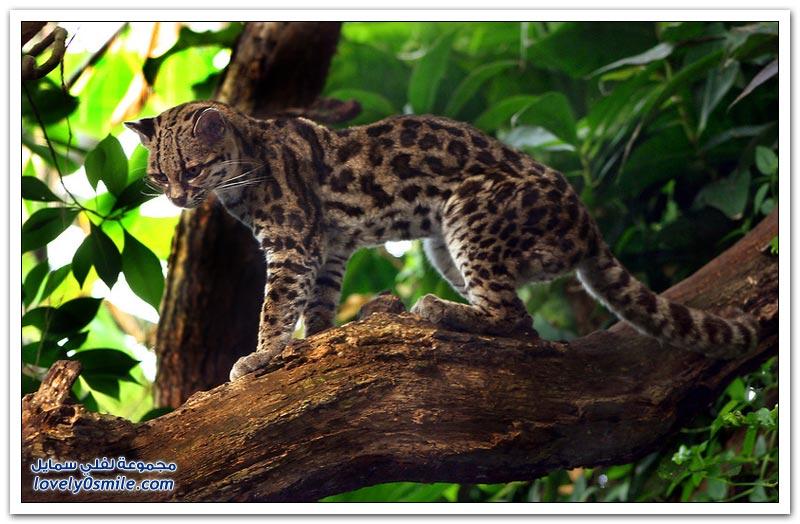 جولة في غابات الأمازون