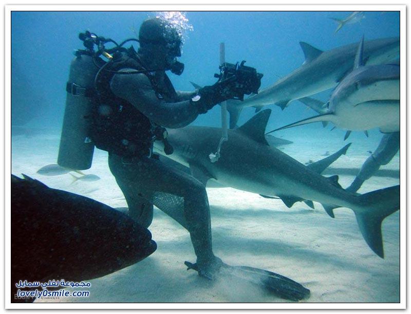 الغوص مع أسماك القرش