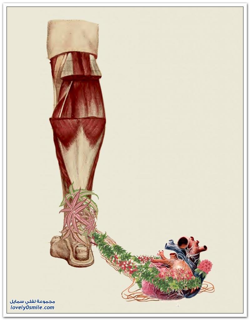 الفن التصويري التشريحي للفنان ترافيس بيديل