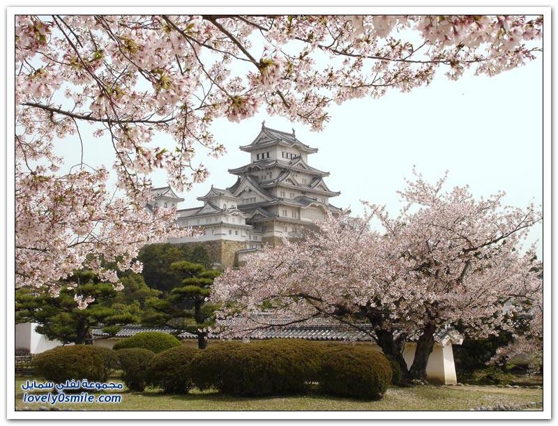 قلعة الغراب - ماتسوموتو