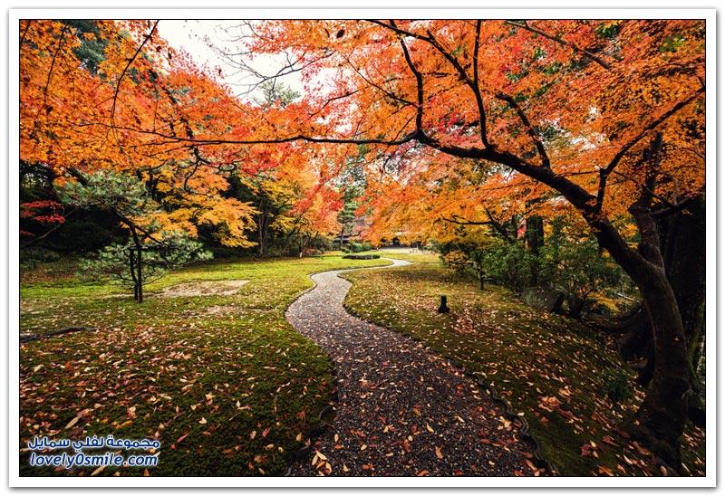 صور من المناظر الطبيعية في اليابان