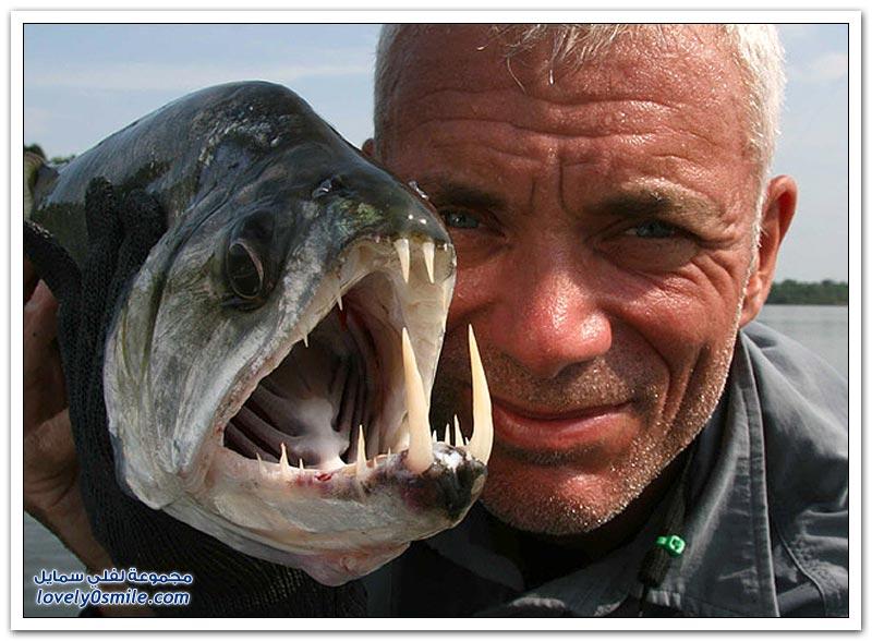 صور للأسماك الضخمة في الأنهار