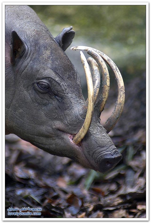 أندر الحيوانات على وجه الأرض
