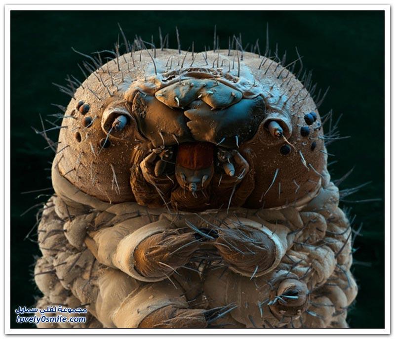 المخلوقات المدهشة التي لا ترى إلا بالمجهر