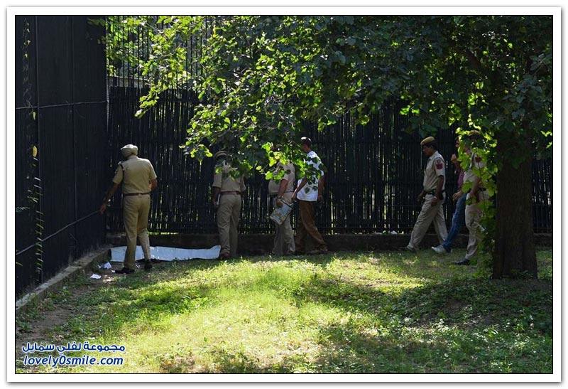 نمر أبيض يقتل طالب هندي بحديقة حيوان في الهند