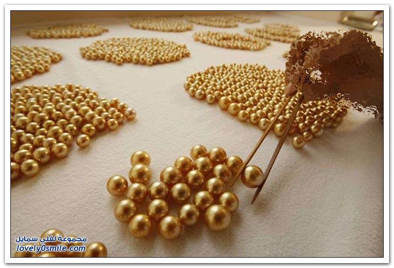 كيفية زراعة اللؤلؤ الذهبي