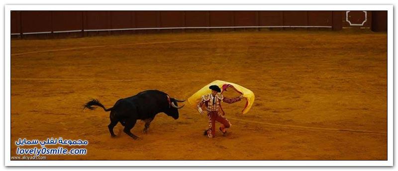 عشق الأسبان مصارعة الثيران