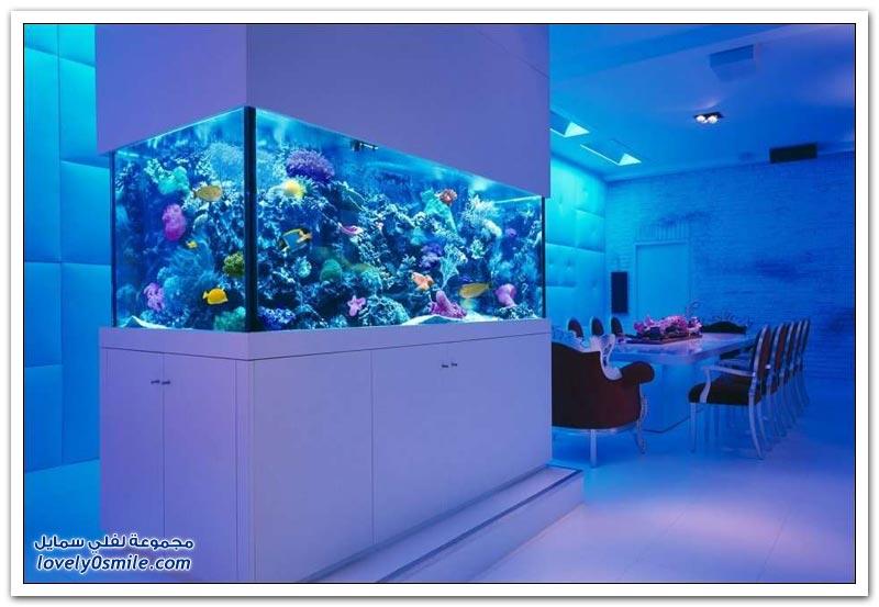 تصاميم لأحواض سمك رائعة