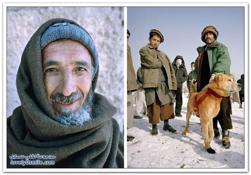 قتال الكلاب في أفغانستان