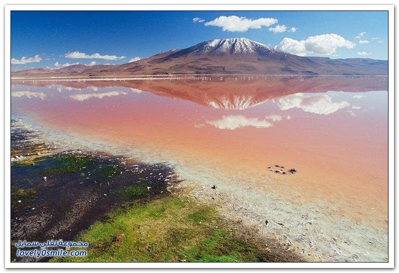 بحيرة اللاجون الأحمر مشروع الخور الأحمر في بوليفيا