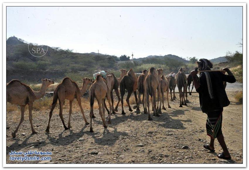 محافظة العيدابي
