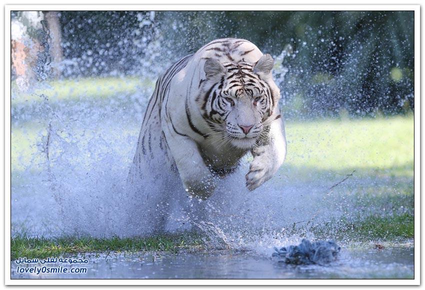 أفضل صور الحيوانات لعام 2014م