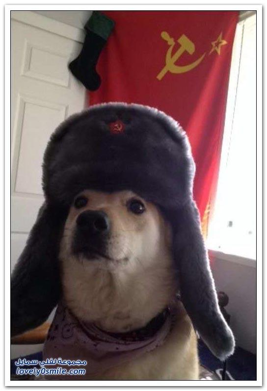 فقط في روسيا ج21
