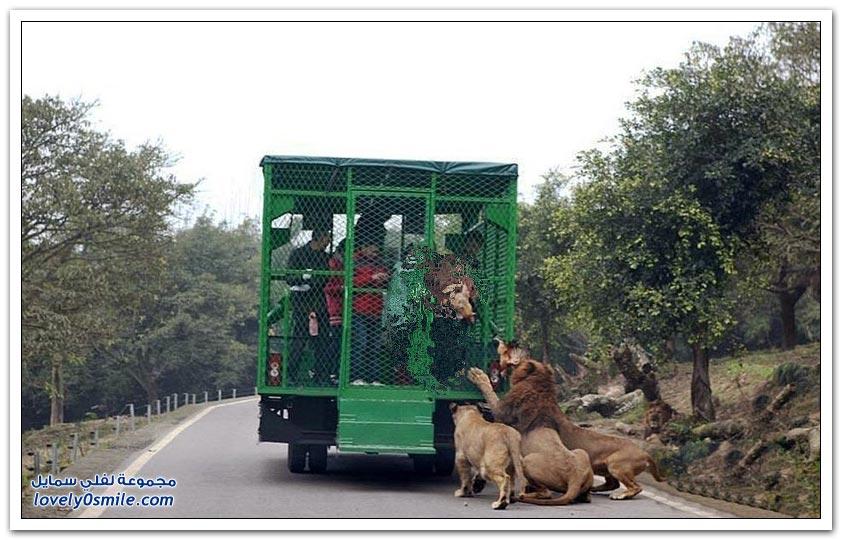 أغرب حديقة حيوان في العالم