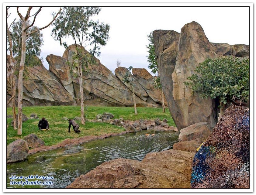 بيوبارك حديقة تحتوي على أكبر مجموعة من الحيوانات الأفريقية