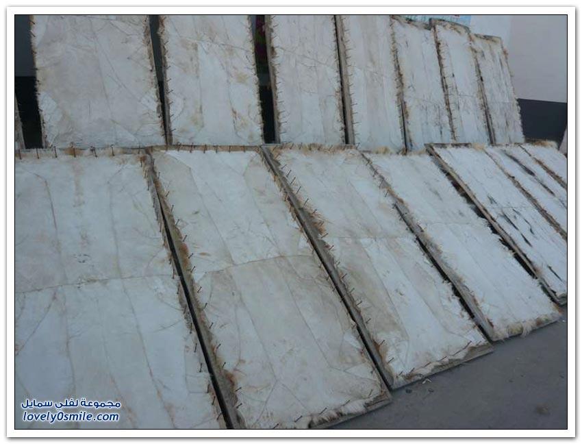 تصنيع القفازات من جلود الكلاب في الصين