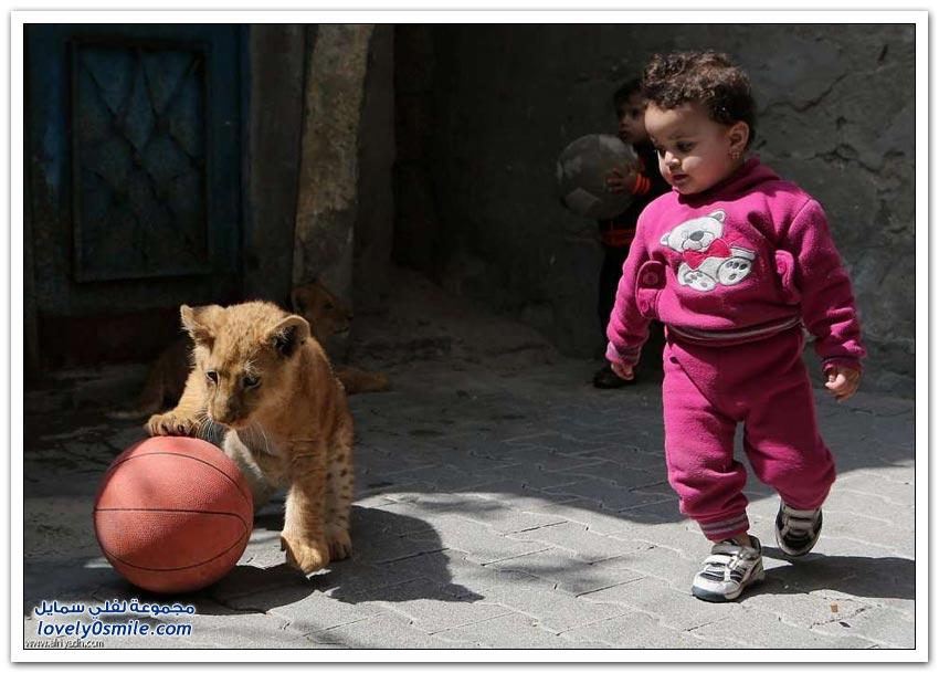أشبال غزة