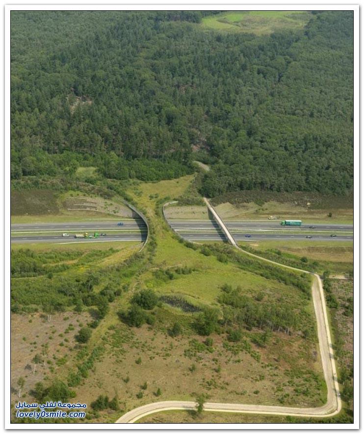 جسور مخصصة للحيوانات