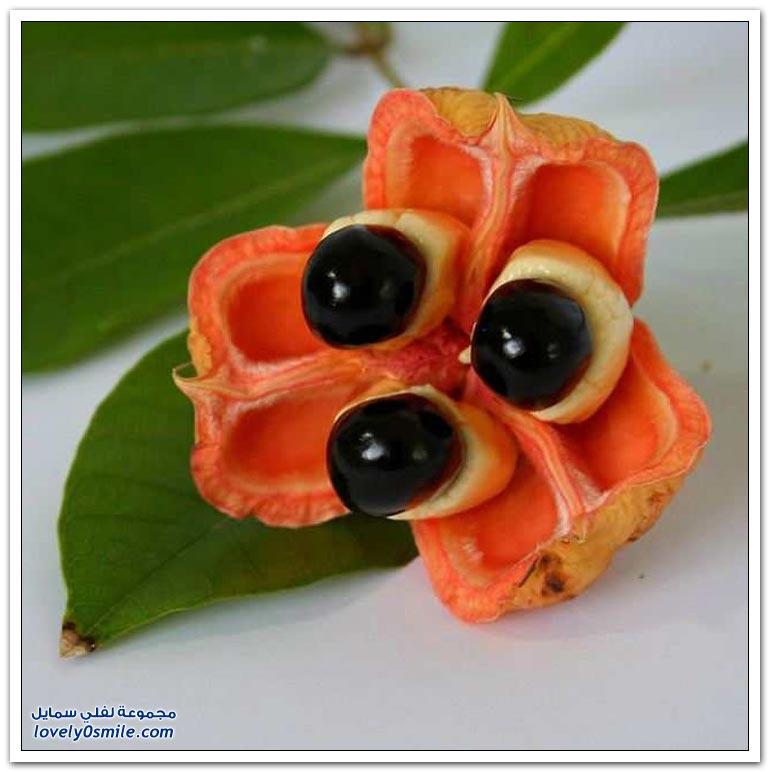 الفواكه الغريبة من جميع أنحاء العالم