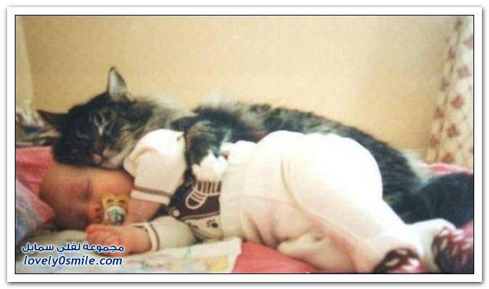 القطط والأطفال