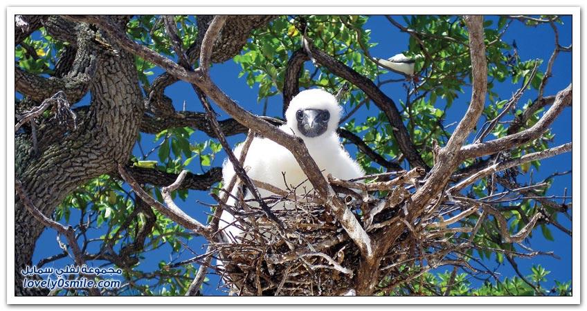 جزيرة مارلون براندو في بولينيزيا الفرنسية