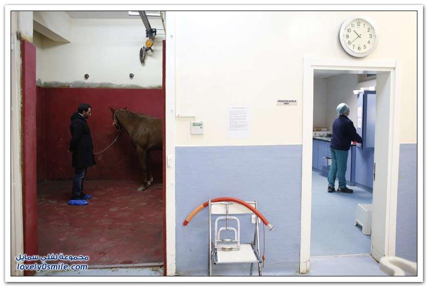 عيادة بيطرية للخيول في اسطنبول