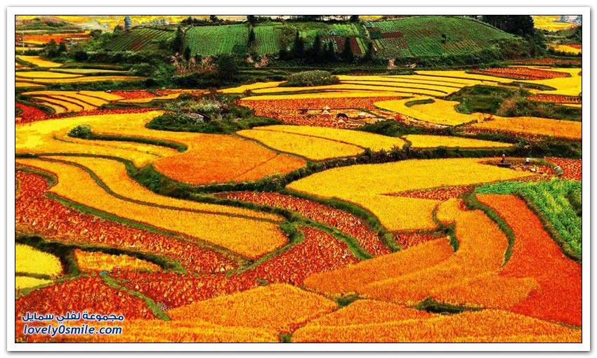 المُدرجات الزراعية في الصين
