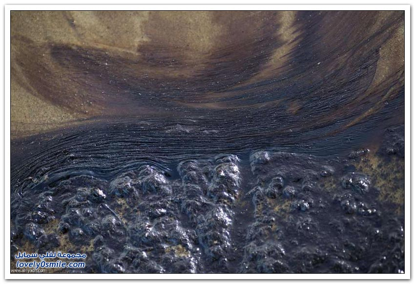 النفط يهاجم شواطئ كاليفورنيا
