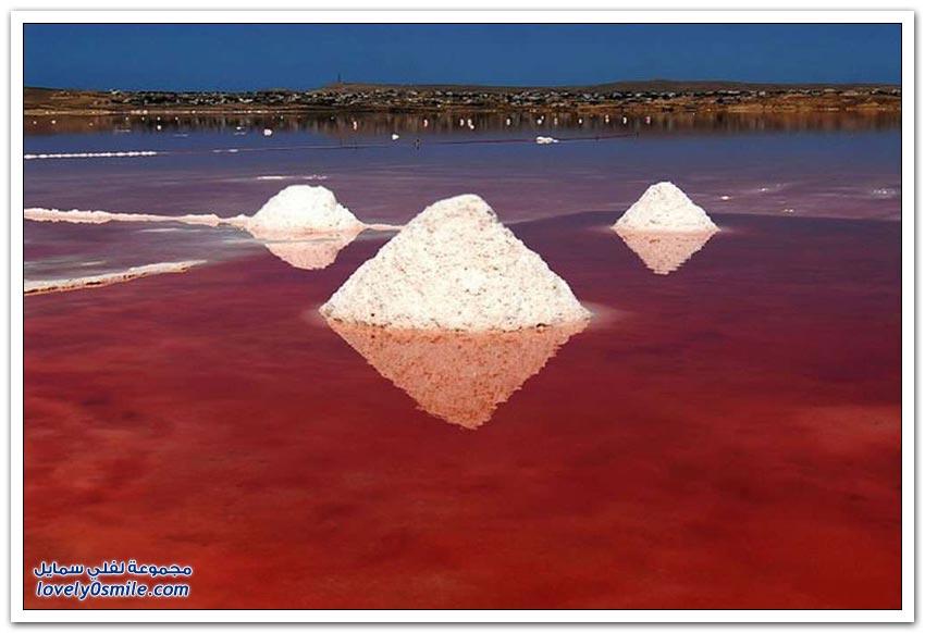 البحيرات الوردية حول العالم