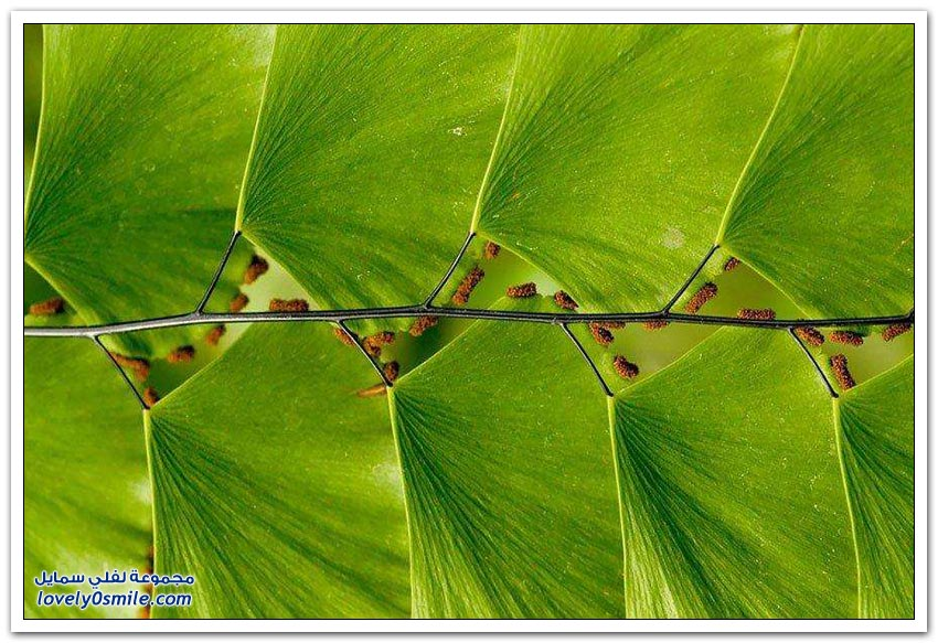 نباتات ذات أشكال هندسية عجيبة