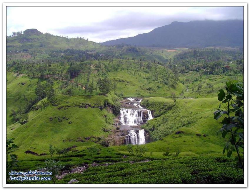 مزارع الشاي في بعض دول العالم