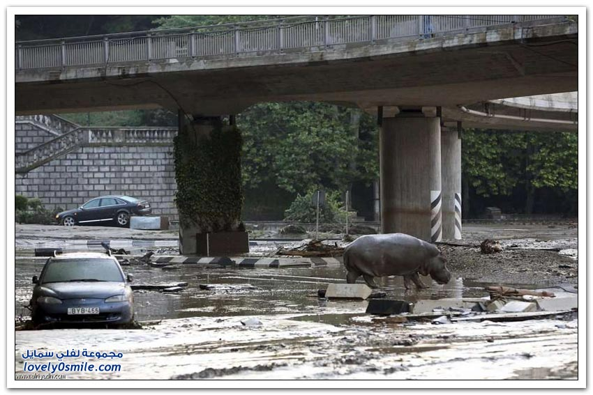 هروب جماعي من حديقة حيوان تبليسي بسبب الفيضانات في جورجيا