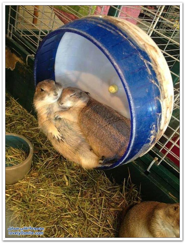 العواطف عند الحيوانات
