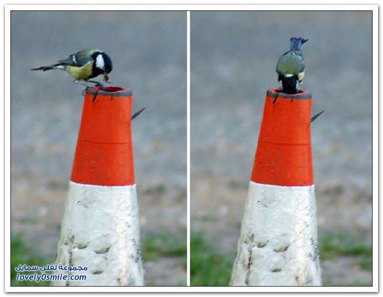 أعشاش طيور في أماكن غريبة