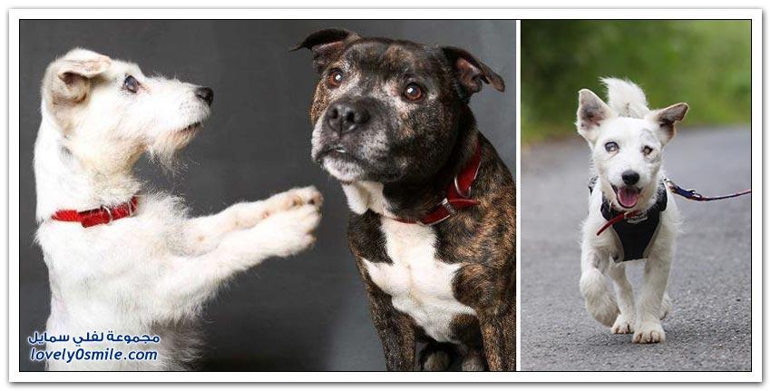 كلب مبصر يقود كلب أعمى