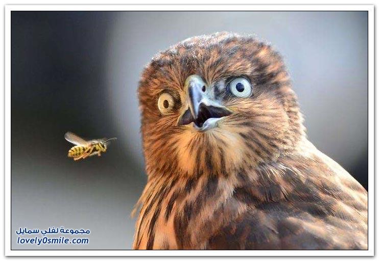 صور طريفة لبعض الحيوانات