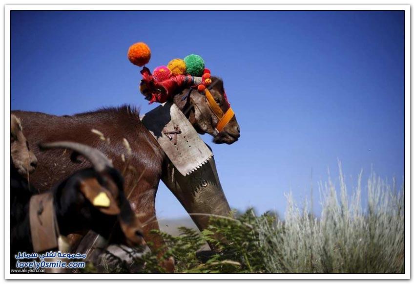 رعاة الماعز في البرتغال