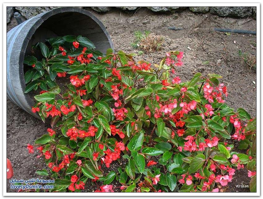 أفكار رائعة لتزيين حديقة المنزل