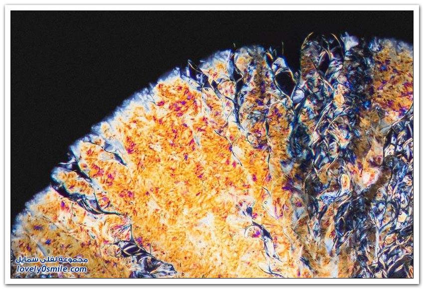 صور للمخدرات تحت المجهر