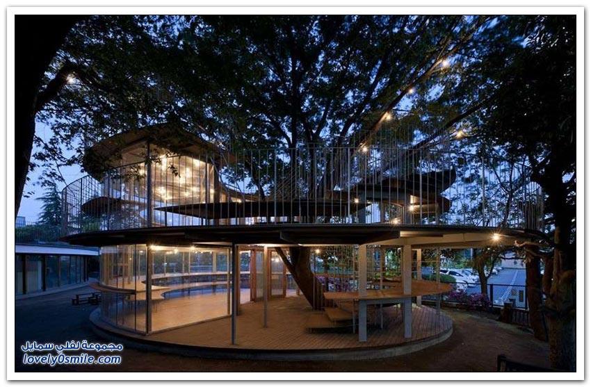 منازل بُنيت وسط الأشجار