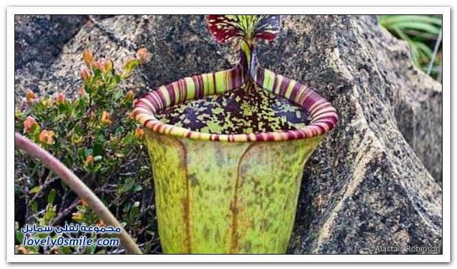 أكثر النباتات المهددة بالانقراض في العالم
