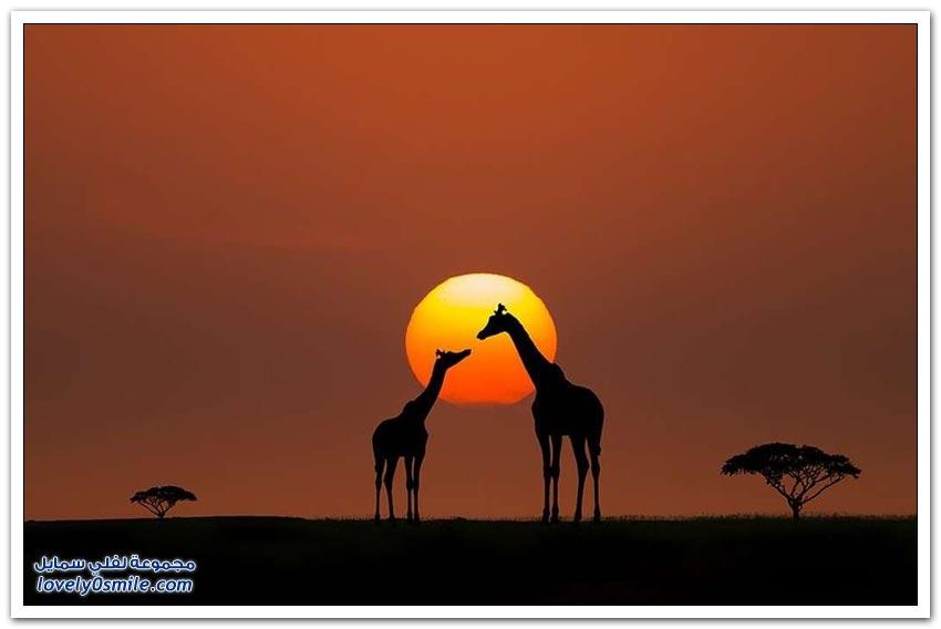من أفضل الصور التي التقطت عند شروق أو غروب الشمس