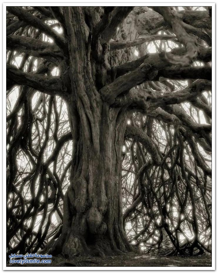 مصور يقضي 14 عام لتصوير أكبر وأقدم الأشجار في العالم